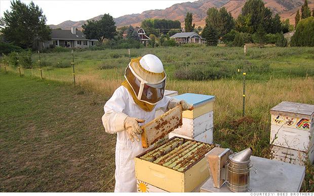 bees bros bitcoin