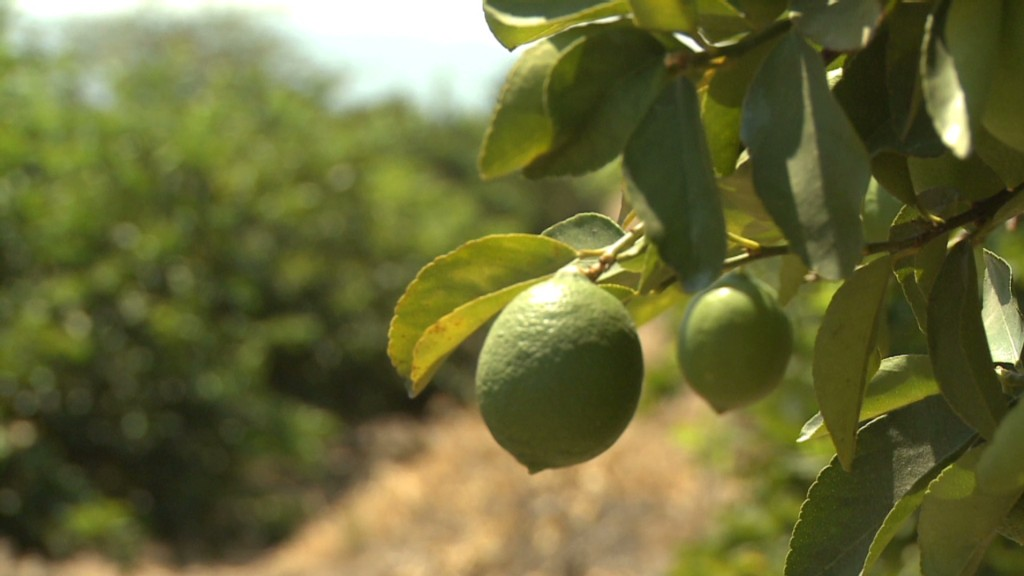 Mexican limes: Hot demand, rising prices