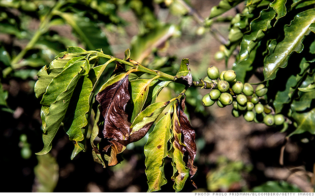 Coffee prices skyrocket after Brazil drought