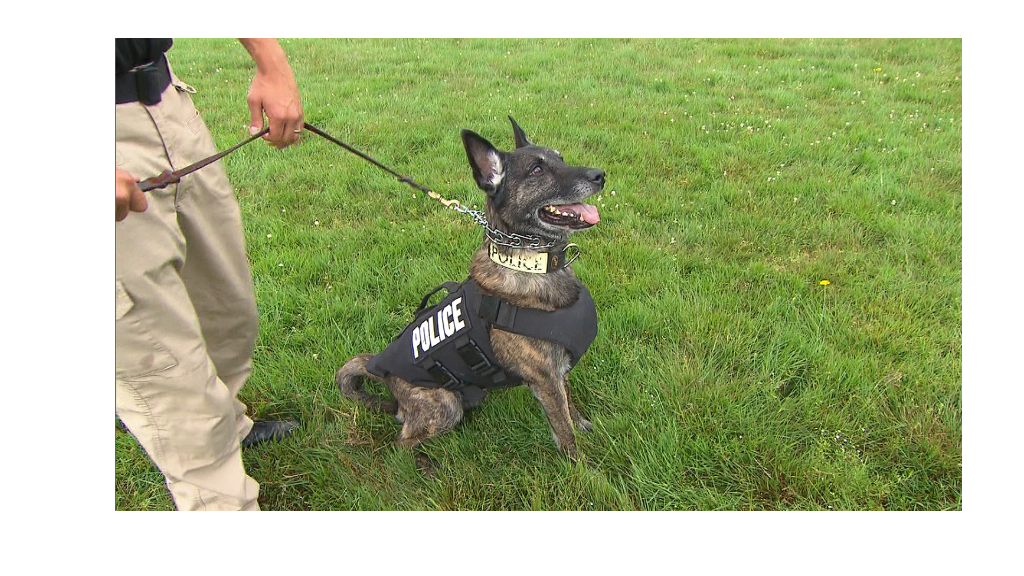Bulletproof vests for canine cops