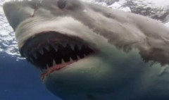 'Shark Week' isn't what's driving Discovery