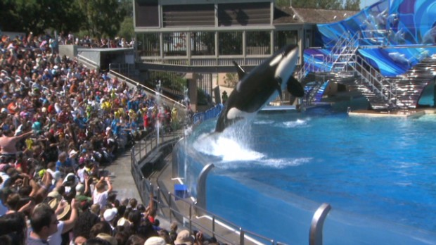 SeaWorld stock takes a deep dive