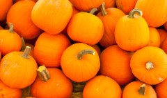 Did Starbucks start a pumpkin boom?