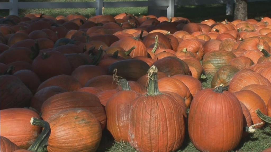 Thanks Starbucks: Pumpkin sales skyrocket