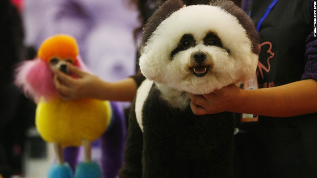 China spends $1.5 billion pampering pets