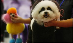 China spends $1.5B on pet care