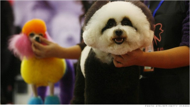 China's $1.5 billion pet care bill