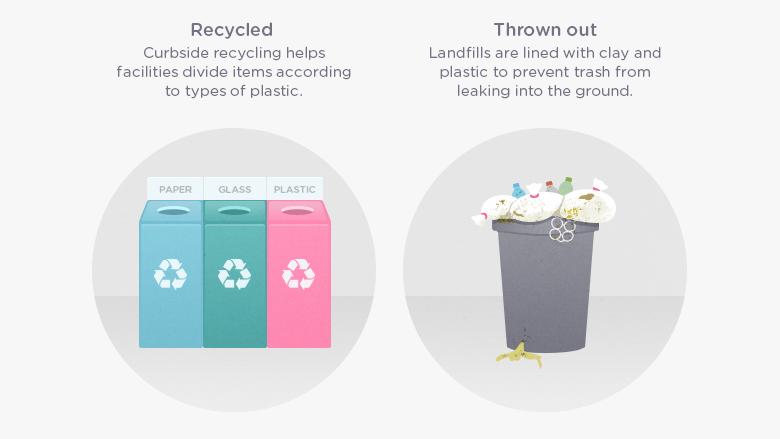 Plastic Bags Turtles