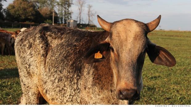 La revolución de las apps llega a las vacas