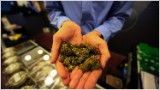 Colorado facing influx of black market pot