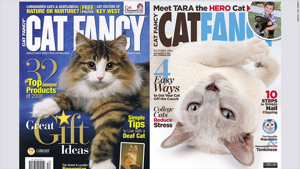 cat fancy magazine