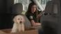 GoDaddy pulls puppy ad after backlash