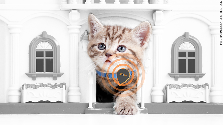 pixie technology cat