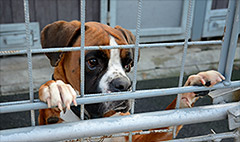 No dogs allowed: San Francisco's pet housing crisis
