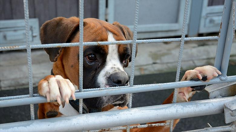 No se permiten perros: la crisis de la vivienda en San Francisco ha afectado a las mascotas