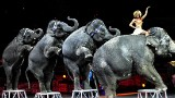 Ringling Bros. to phase out elephants