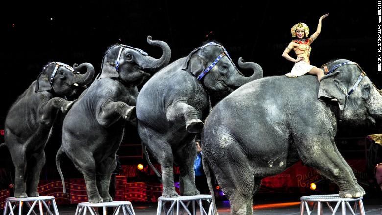 ringling bros elephants