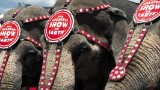 Ringling Bros. phasing out elephant acts