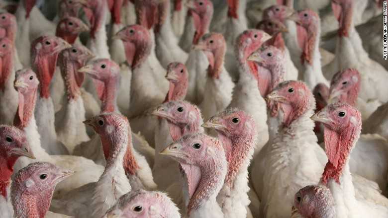 bird flu turkeys