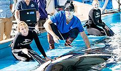 SeaWorld says PETA 'lies' about killer whales