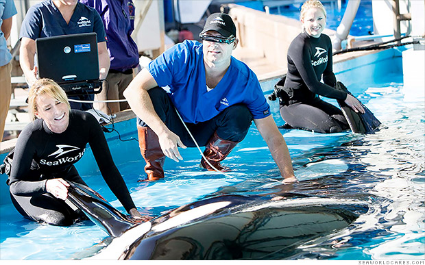 seaworld says peta  u0026 39 lies u0026 39  about killer whales