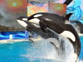 'Ask SeaWorld' marketing campaign backfires