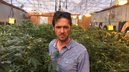 No, pot farmers don't get high all day long