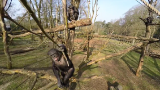 Chimpanzee takes down a drone