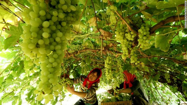 china wine vineyard