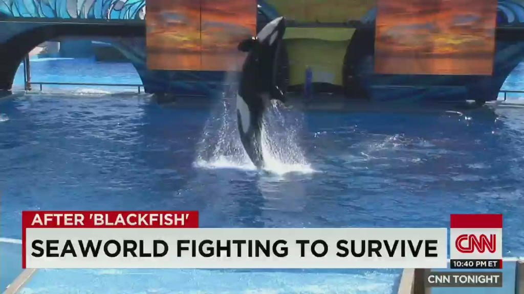Should there still be a SeaWorld?