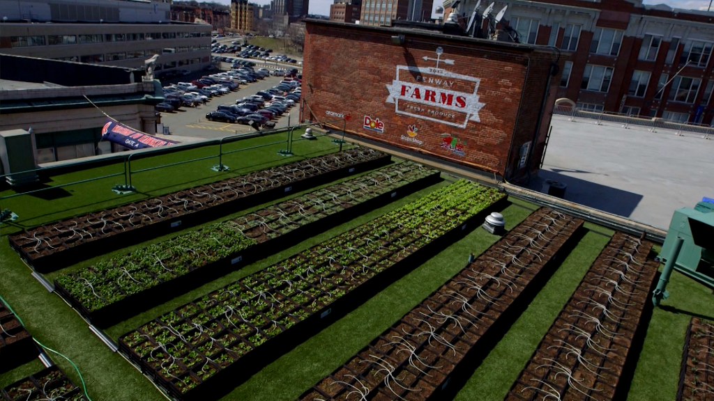 There's a secret garden on Fenway's roof