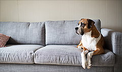 These are the most pet-friendly rental markets