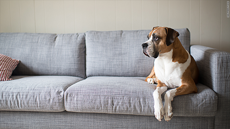 pet-friendly rental markets