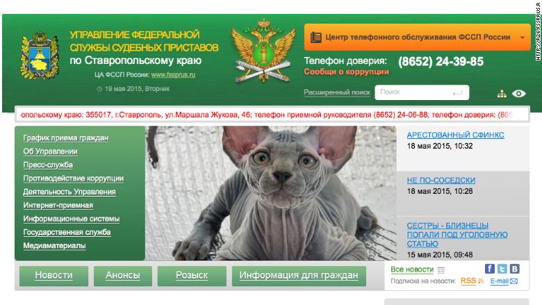 russia cat