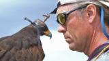 I get paid to train birds of prey