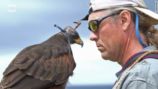 24 hours with a falcon whisperer