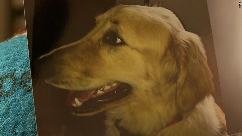 petco dog death