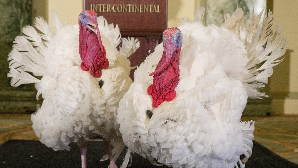 Warning: you may never eat turkey again after watching this
