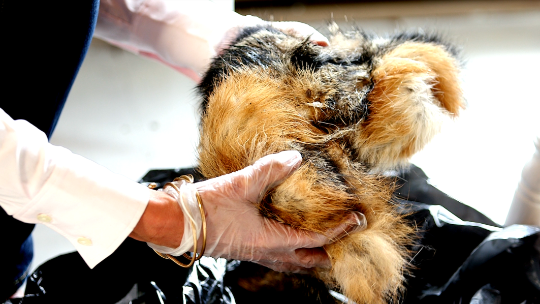 She charges hundreds for fur made of road-kill