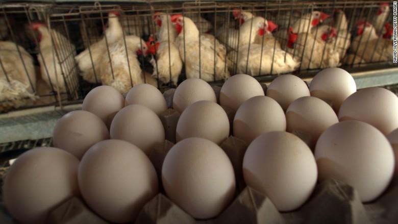 cage hen egg gm