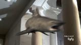 'Sharknado 3' star: 'This movie's got legs'