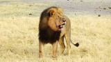 Lion killer's dental practice target of outrage