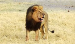 Can Cecil the Lion's death spark change?