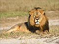 Delta, American Airlines refuse to carry some big game trophies