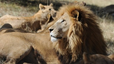 Several airlines ban animal trophies as cargo