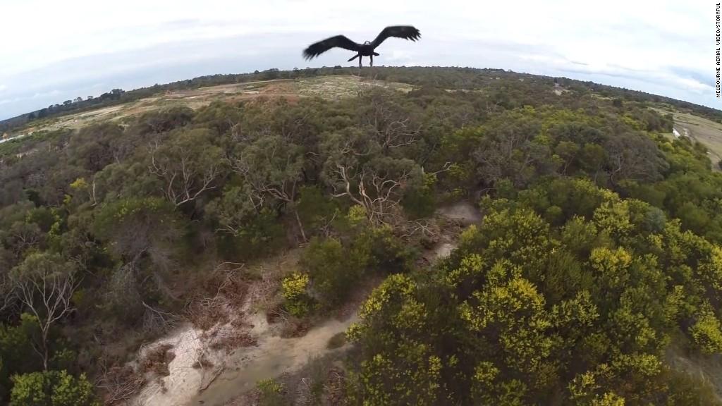 Eagle knocks drone out of sky