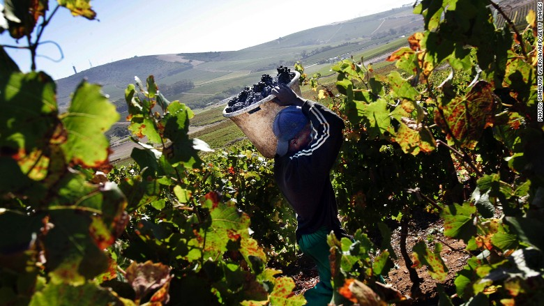 South africa 39 s wine industry is booming for Jardin wine south africa