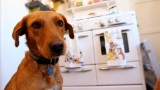 'Airbnb' for dogs