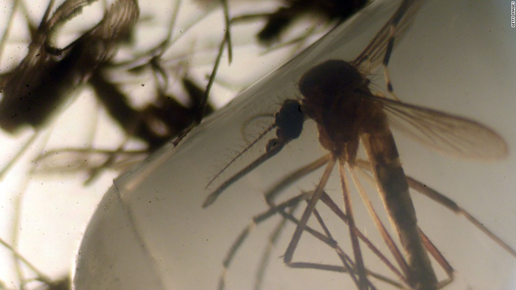 Google to help map Zika's spread