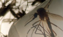 Google to help map Zika's spread